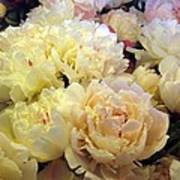 Peonie Poster