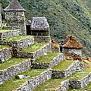 Peru: Machu Picchu Poster