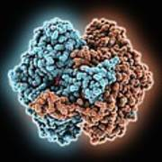 Phosphoglucose Isomerase Molecule Poster
