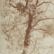 Photograph Of A Tree Poster