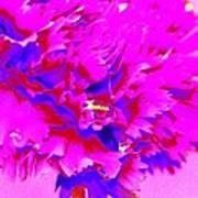 Pink Carnation Poster