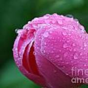 Pink Rain Drops Poster