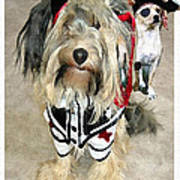 Pirate Dogs Poster