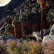 Plants On Landscape, Anza Borrego Poster
