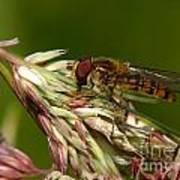 Pollinator Poster
