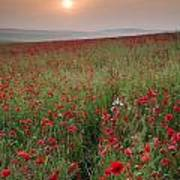 Poppy Field Landscape In Summer Countryside Sunrise Poster