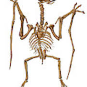 Pterodactylus, Extinct Flying Reptile Poster