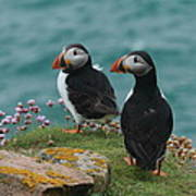 Puffins Poster by Peter Skelton
