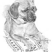 Puppy On A Blanket Pencil Portrait Poster