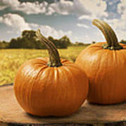 Pumpkins Poster by Amanda Elwell
