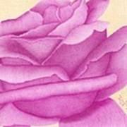 Purple Organdy Rose Poster