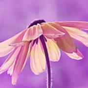Purple Soft Poster