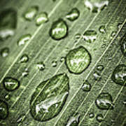 Raindrops On Green Leaf Poster