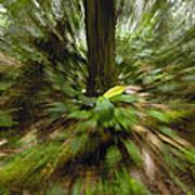Rainforest Andes Mountains Ecuador Poster