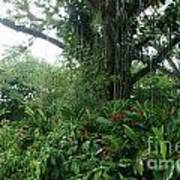 Rainforest At Ys River Poster