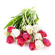 Red And White Tulips Poster by Elena Elisseeva