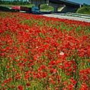 Red Poppy Field Near Highway Road Poster