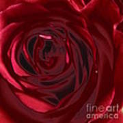 Red Rose Abstract 2 Poster