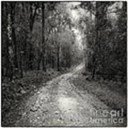 Road Way In Deep Forest Poster