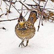 Ruffed Grouse Walking On Snow - Horizontal Poster