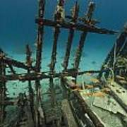 Safari Boat Wreckage And Aquatic Life In The Red Sea. Poster