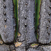 Saguaro Cactus Close-up Poster