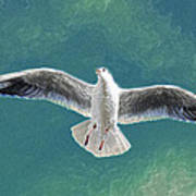 10427 Seagull In Flight Poster