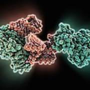 Selb Elongation Factor Bound To Rna Poster