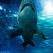Shark Silhouette Underwater Poster