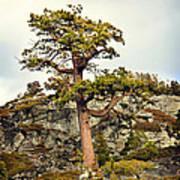 Sierra Landscape Poster