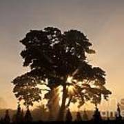 Silhouetted Tree With Sun Rays Poster