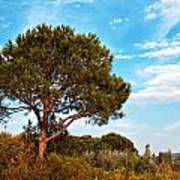 Single Pine Tree Against Blue Autumn Sky Poster