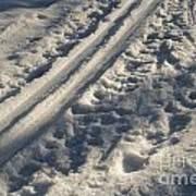 Ski Track In Sunlight Poster