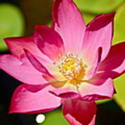 Sparks Lotus Poster