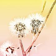 Spring Dandelion Poster