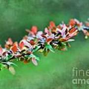 Spring Raindrops On Leaves - Digital Paint Poster