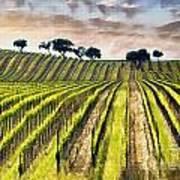 Spring Vineyard Poster