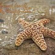 Starfish On Beach Poster