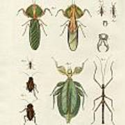 Strange Insects Poster