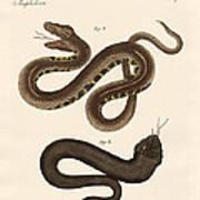 Strange Snakes Poster
