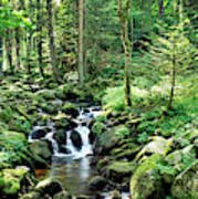 Stream Flowing Through A Forest, Usa Poster