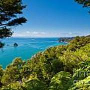 Subtropical Forest Of Abel Tasman Np In New Zealand Poster