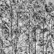 Summer Forest Trees Poster