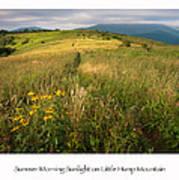 Summer Morning Sunlight On Little Hump Mountain Poster