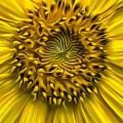 Sunflower In Oil Paint Poster