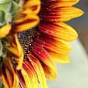 Sunflower Named The Joker Poster
