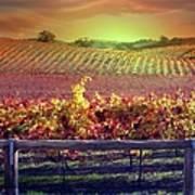 Sunrise Vineyard Poster