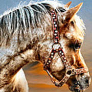 Sunset Pony Poster