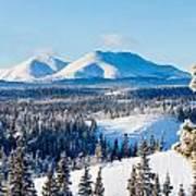 Taiga Winter Snow Landscape Yukon Territory Canada Poster