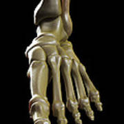 The Foot Bones Poster